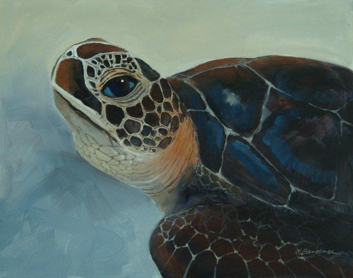 Logerhead Turtle 11x14