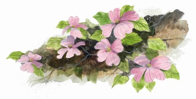 Pink Dogwoods_1